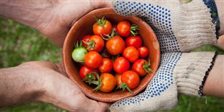Cherry tomatoes in a pottery dish - photo by Elaine Casap